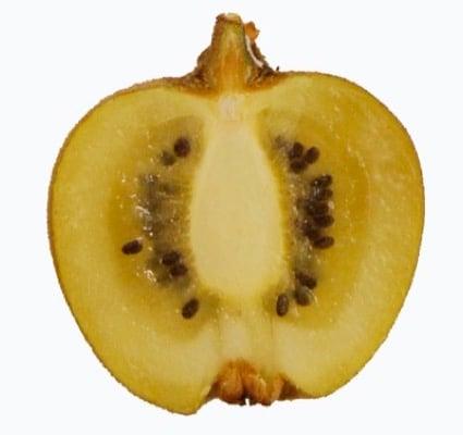 Actinidia Minkigold