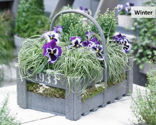 Carex EverColor® 'Everlite'