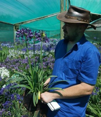 Agapanthus Everpanthus® Poppin' Purple