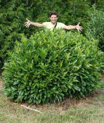Prunus Green Planet