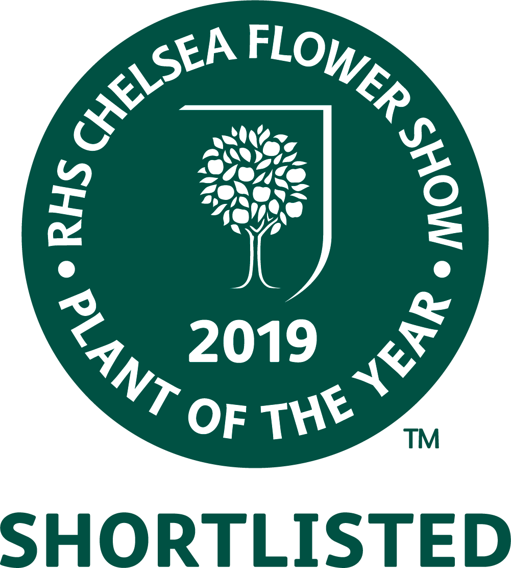 Chelsea 2019 shortlisted