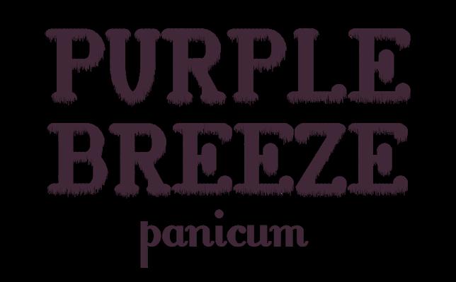 logo-Panicum Purple Breeze