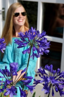 Agapanthus Brilliant Blue