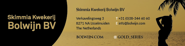 Skimmia Kwekerij Bolwijn BV
