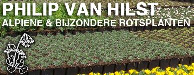 Philip van Hilst Alpine & Bijzondere Rotsplanten